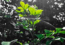 Struer Nyheder Folkeskoven